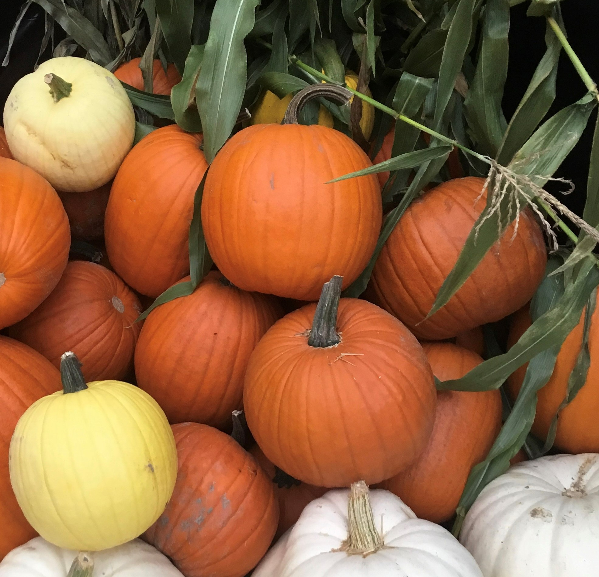 MPM pumpkin  NEW YES